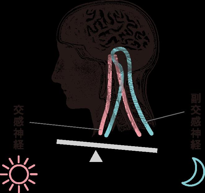 交感神経 副交感神経