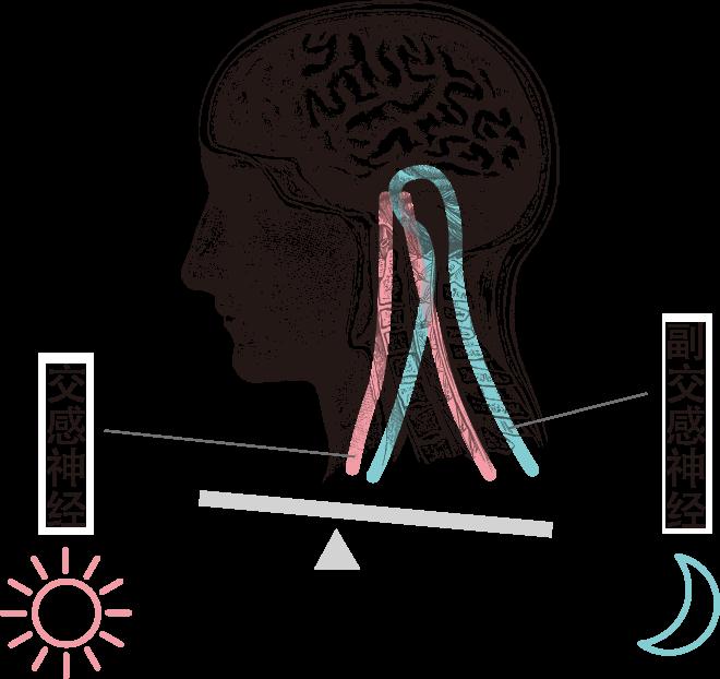 交感神经 副交感神经
