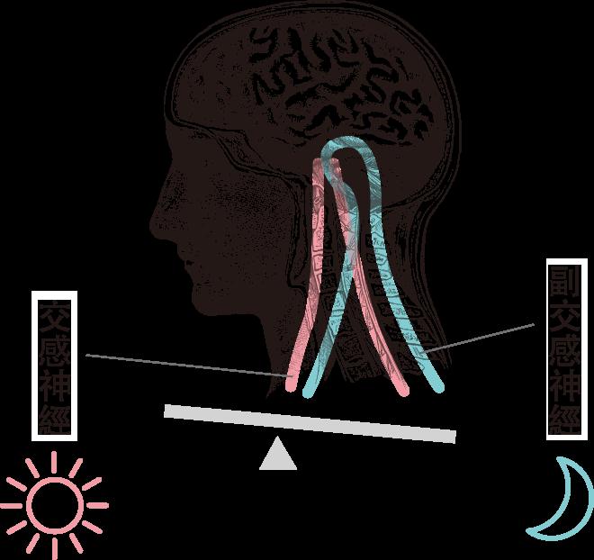 交感神經 副交感神經